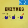 Enzymes and its Properties App Icon
