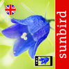 Wild Flower Id Automatic Recognition British Isles App Icon